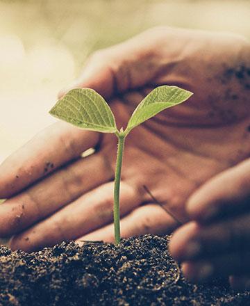 PTP Peduli Lingkungan